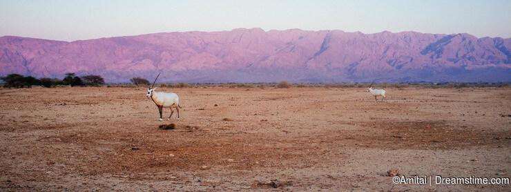 10 dicas para o fotógrafo casual de natureza
