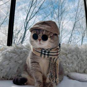 Benson: de um gato de rua a um influenciador de gatos